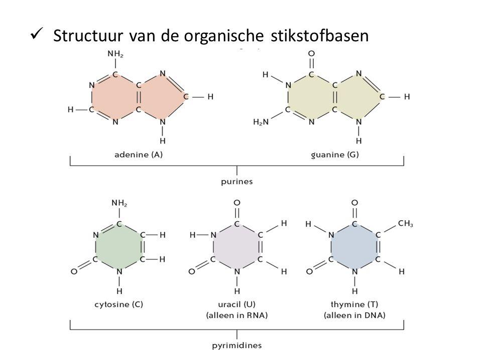Structuur van de organische stikstofbasen