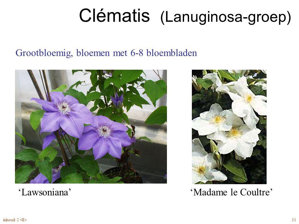 Clématis (Lanuginosa-groep)