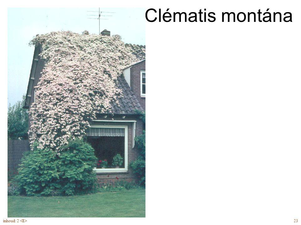 Clématis montána Clematis montana 'Superba' inhoud: 2 <E> 23