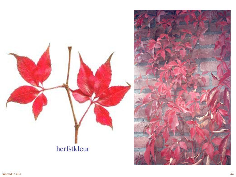 Parthenocissus quinquefolia blad