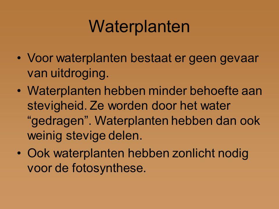 Waterplanten Voor waterplanten bestaat er geen gevaar van uitdroging.