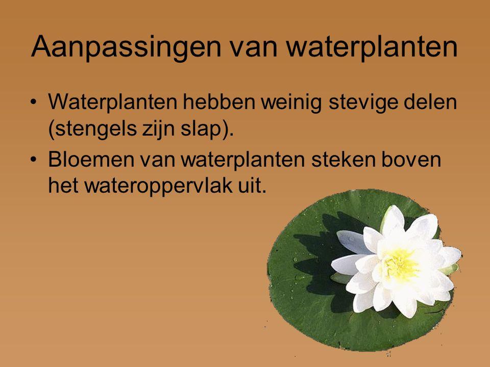 Aanpassingen van waterplanten