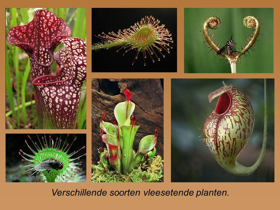 Verschillende soorten vleesetende planten.