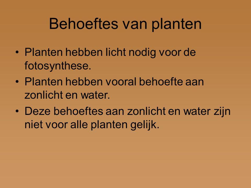 Behoeftes van planten Planten hebben licht nodig voor de fotosynthese.