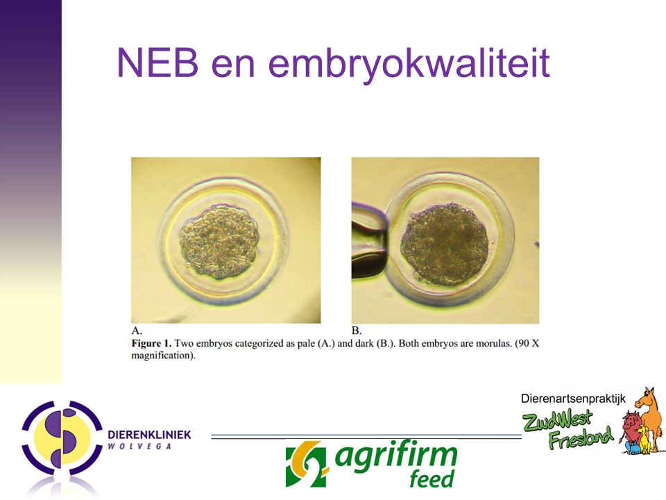 NEB en embryokwaliteit