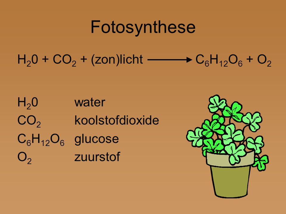Fotosynthese H20 + CO2 + (zon)licht C6H12O6 + O2 H20 water