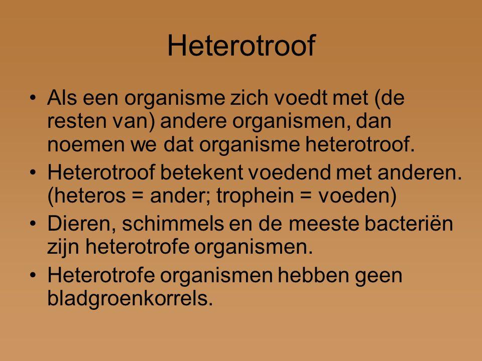 Heterotroof Als een organisme zich voedt met (de resten van) andere organismen, dan noemen we dat organisme heterotroof.