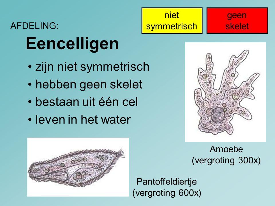 Eencelligen • zijn niet symmetrisch • hebben geen skelet