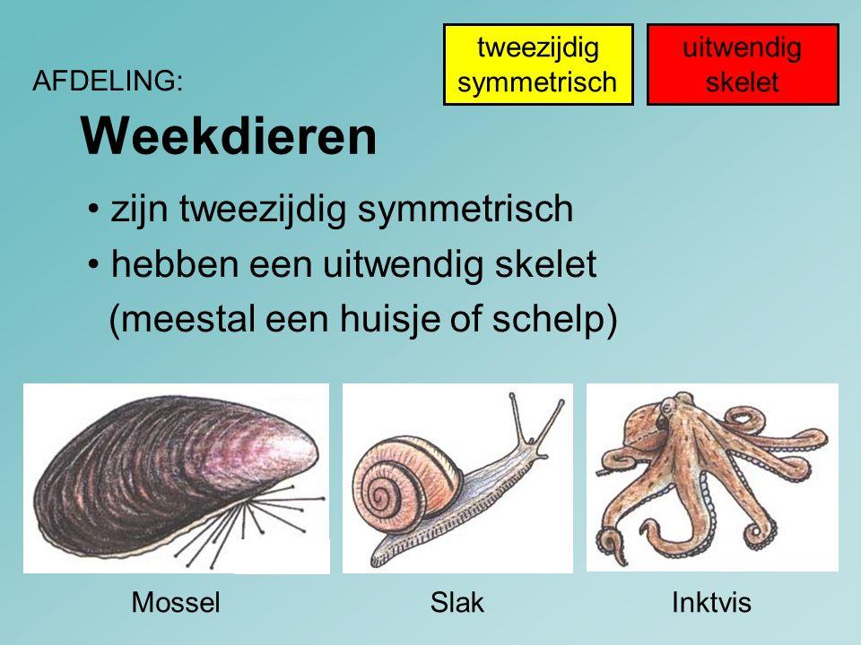 Weekdieren • zijn tweezijdig symmetrisch • hebben een uitwendig skelet