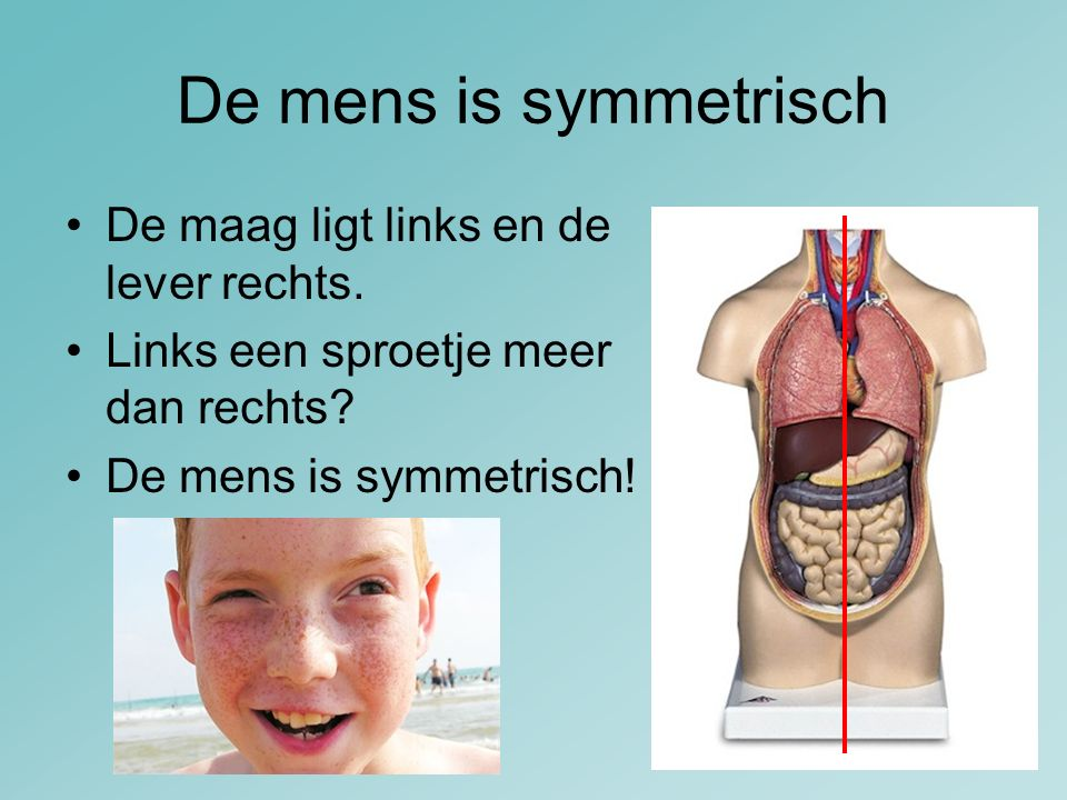 De mens is symmetrisch De maag ligt links en de lever rechts.