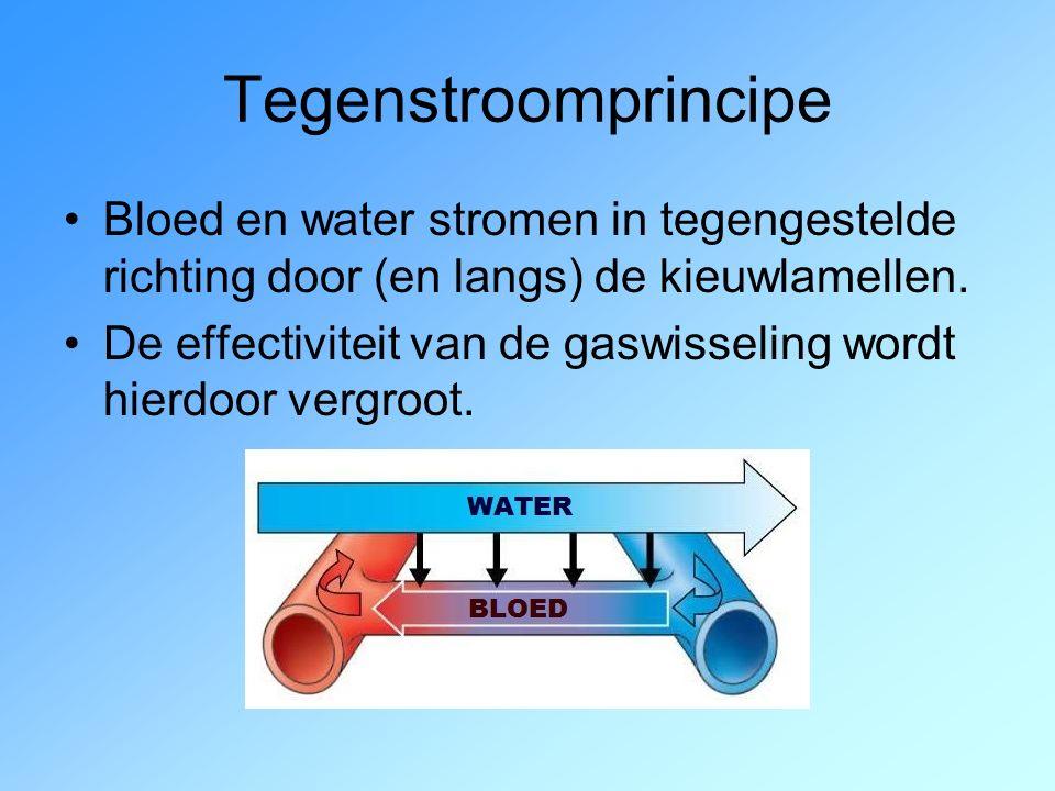 Tegenstroomprincipe Bloed en water stromen in tegengestelde richting door (en langs) de kieuwlamellen.