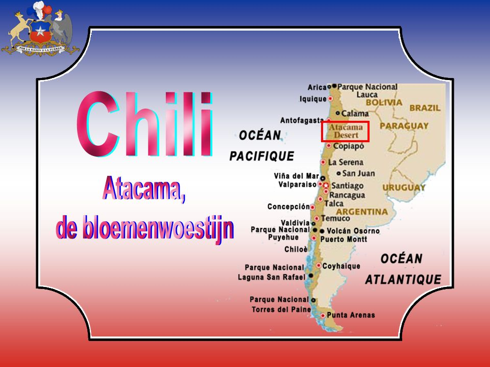 Chili Atacama, de bloemenwoestijn