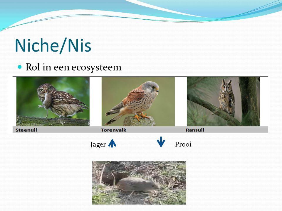 Niche/Nis Rol in een ecosysteem Jager Prooi
