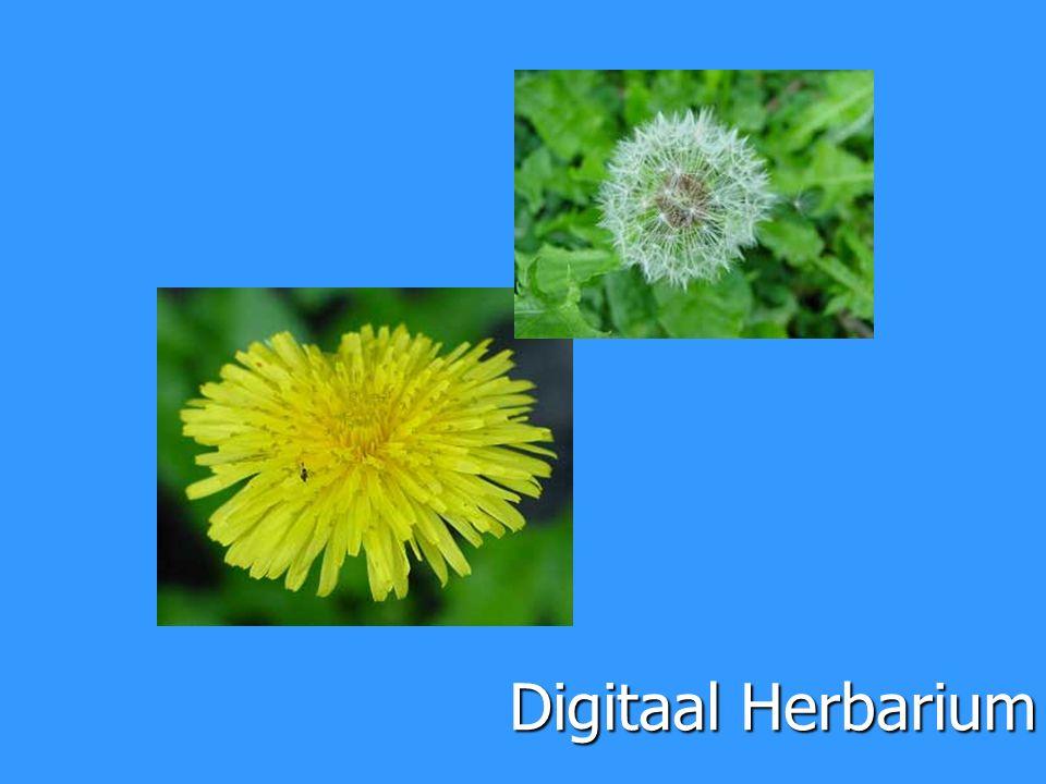 Digitaal Herbarium