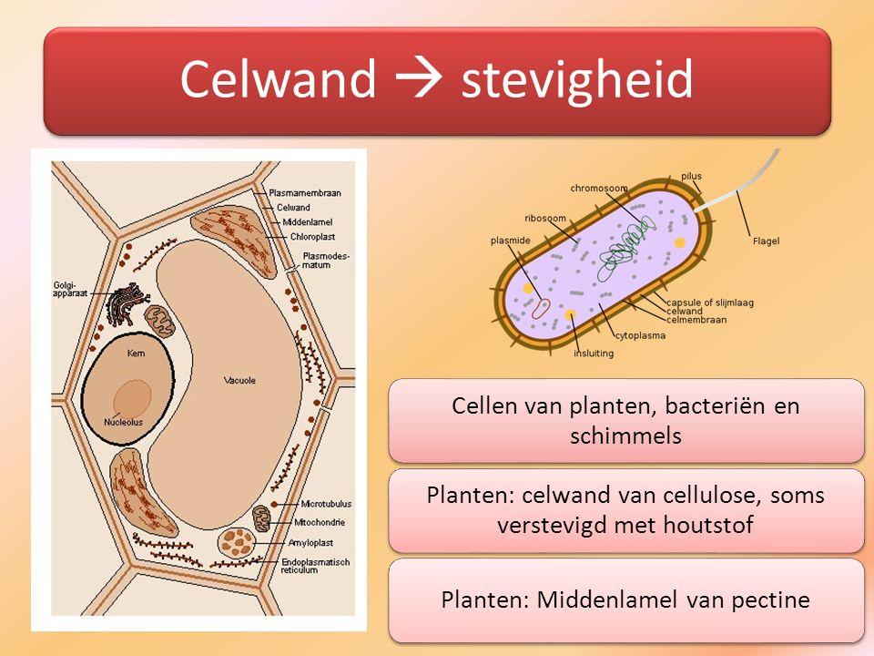 Celwand  stevigheid Cellen van planten, bacteriën en schimmels