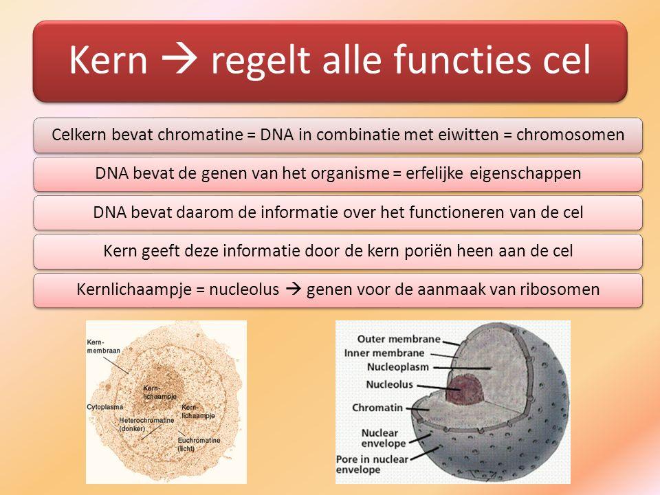 Kern  regelt alle functies cel