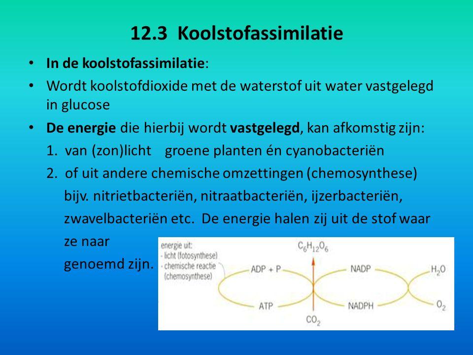 12.3 Koolstofassimilatie In de koolstofassimilatie: