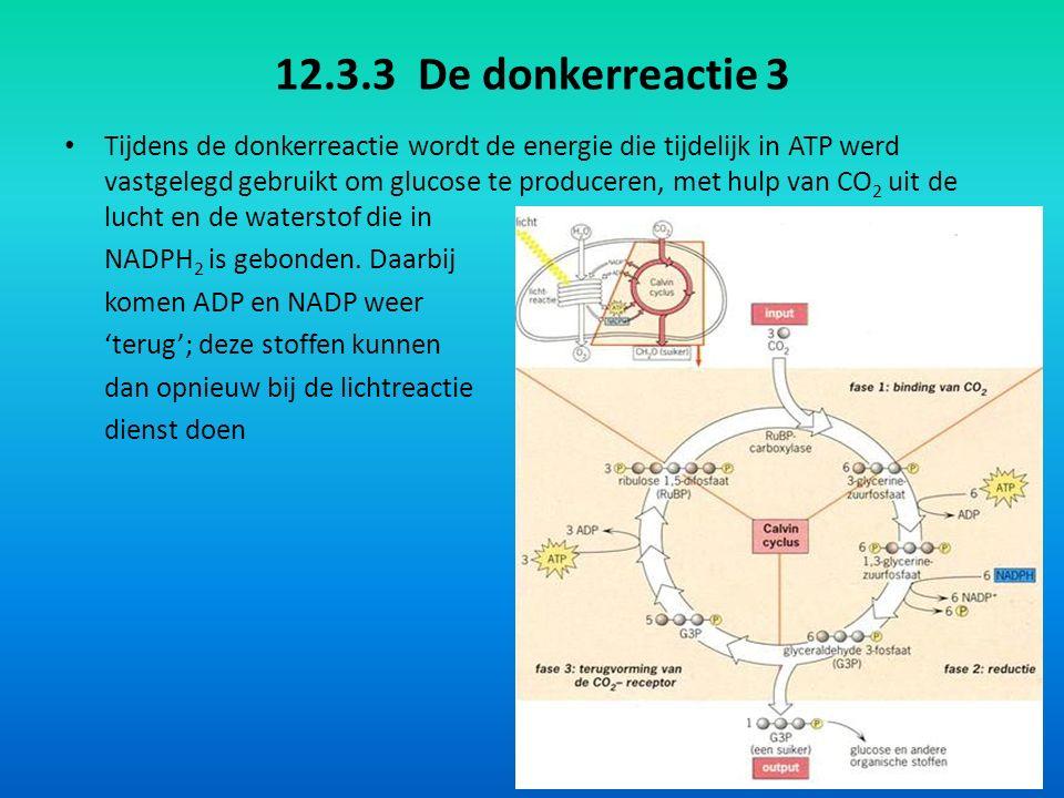 12.3.3 De donkerreactie 3