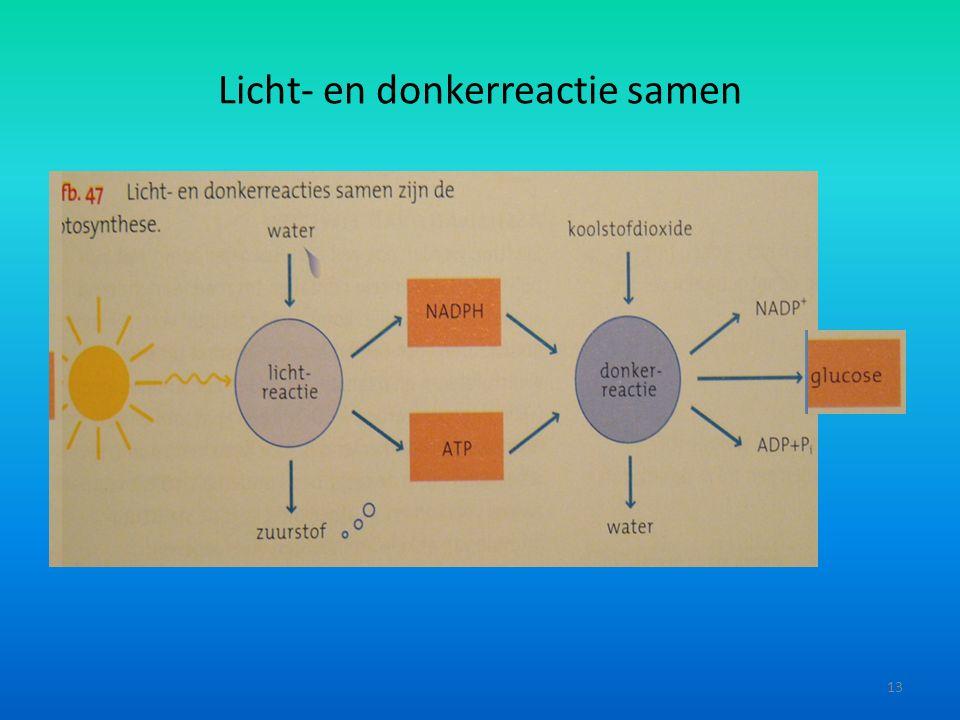 Licht- en donkerreactie samen