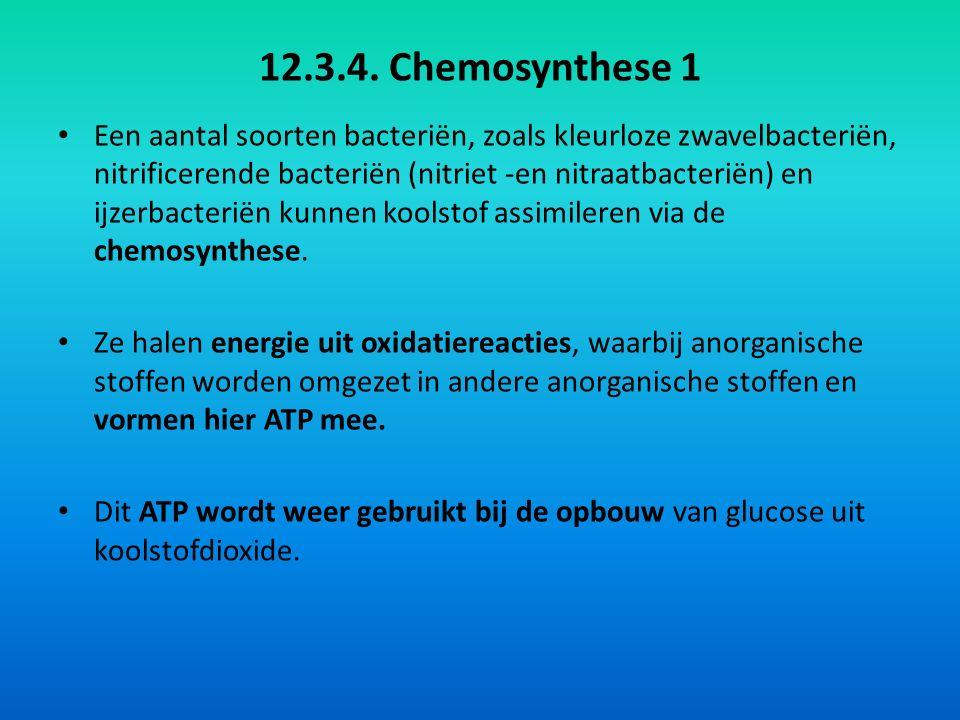 12.3.4. Chemosynthese 1