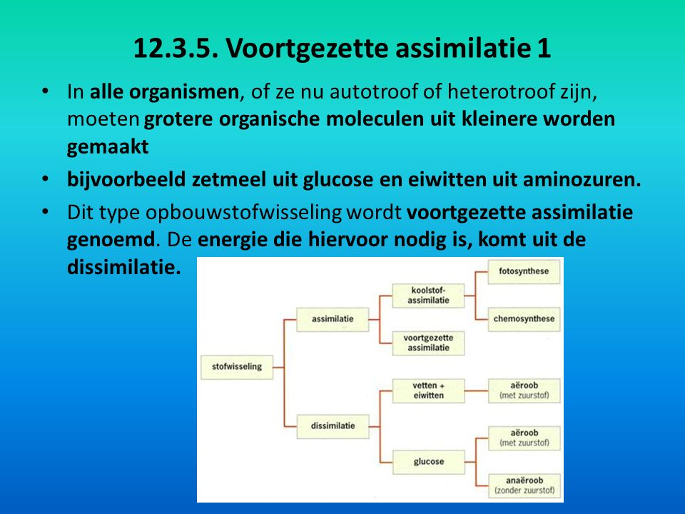 12.3.5. Voortgezette assimilatie 1