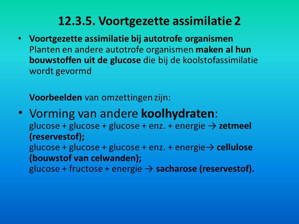12.3.5. Voortgezette assimilatie 2