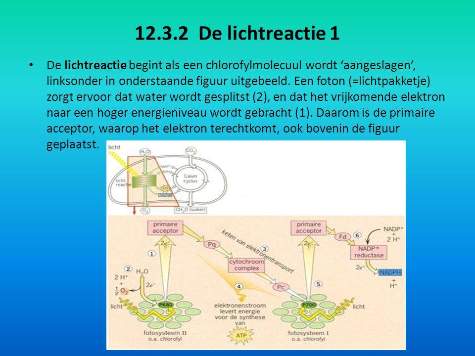 12.3.2 De lichtreactie 1