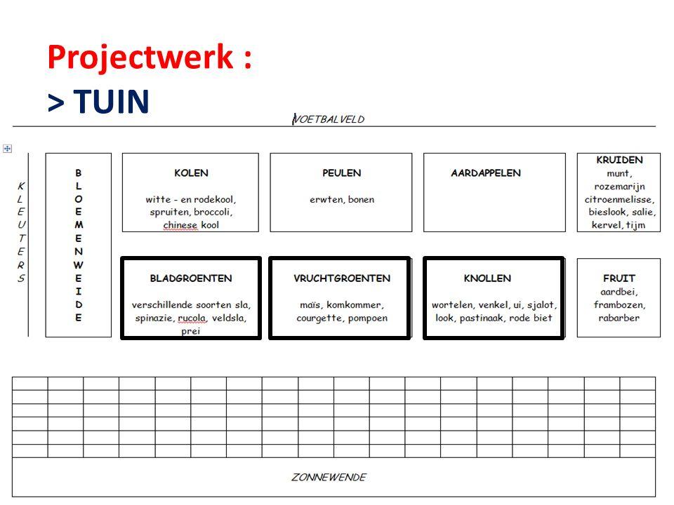 Projectwerk : > TUIN