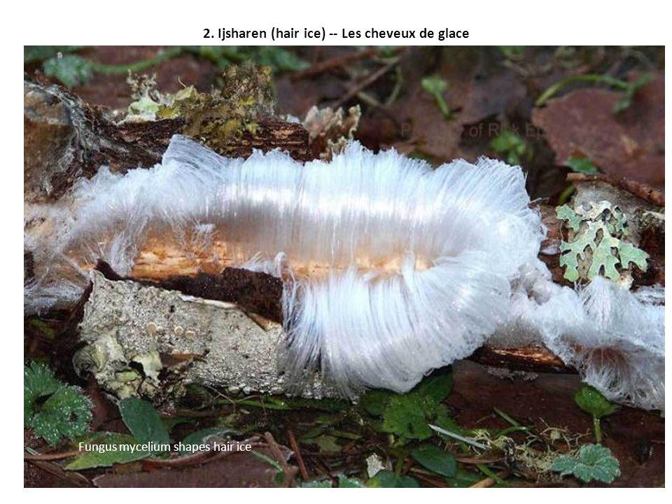 2. Ijsharen (hair ice) -- Les cheveux de glace