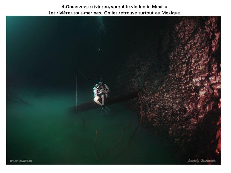 4.Onderzeese rivieren, vooral te vinden in Mexico Les rivières sous-marines.