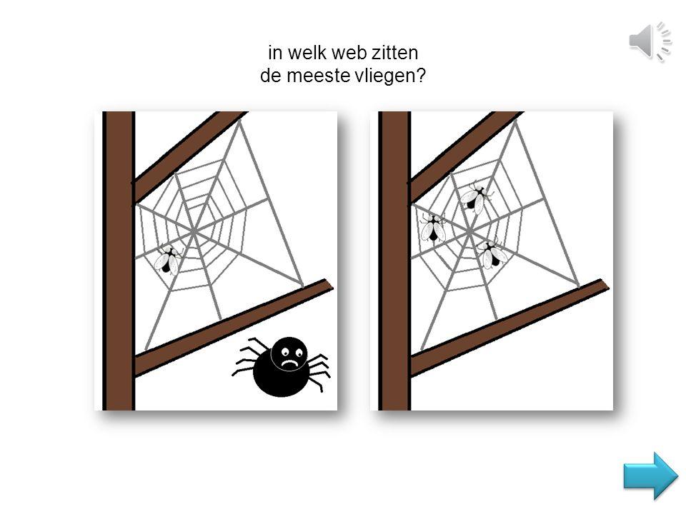 in welk web zitten de meeste vliegen