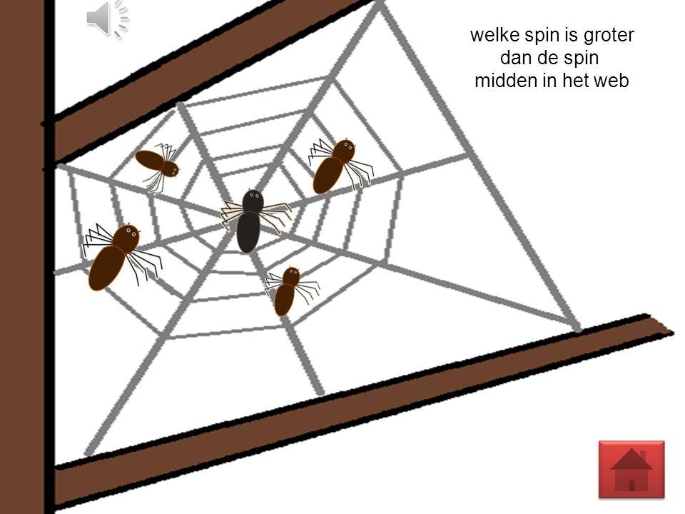 dan de spin midden in het web