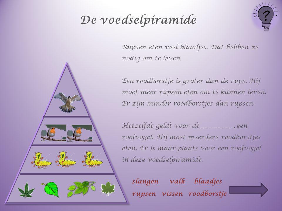 De voedselpiramide Rupsen eten veel blaadjes. Dat hebben ze nodig om te leven.