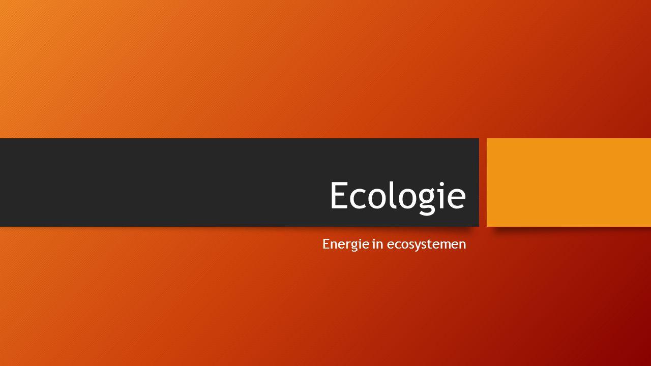 Energie in ecosystemen