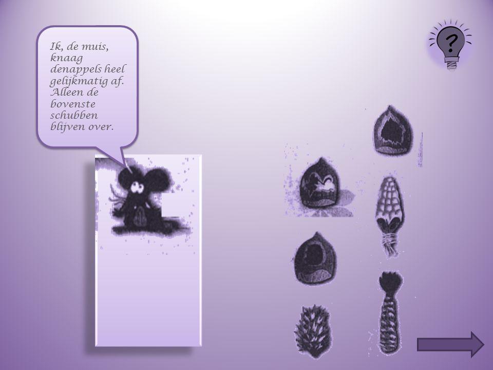 Ik, de muis, knaag denappels heel gelijkmatig af