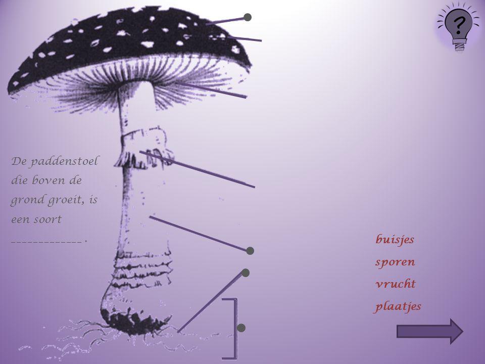 De paddenstoel die boven de grond groeit, is een soort _____________ .