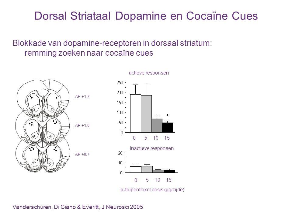 Dorsal Striataal Dopamine en Cocaïne Cues