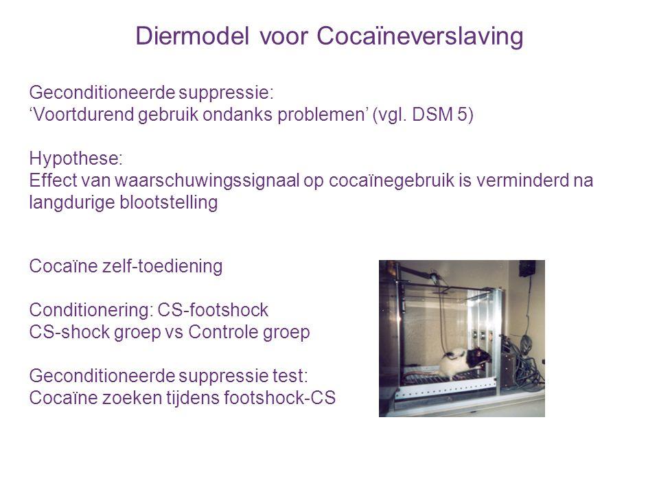 Diermodel voor Cocaïneverslaving
