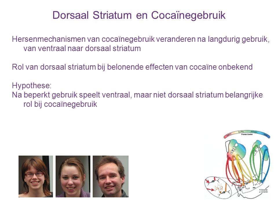 Dorsaal Striatum en Cocaïnegebruik