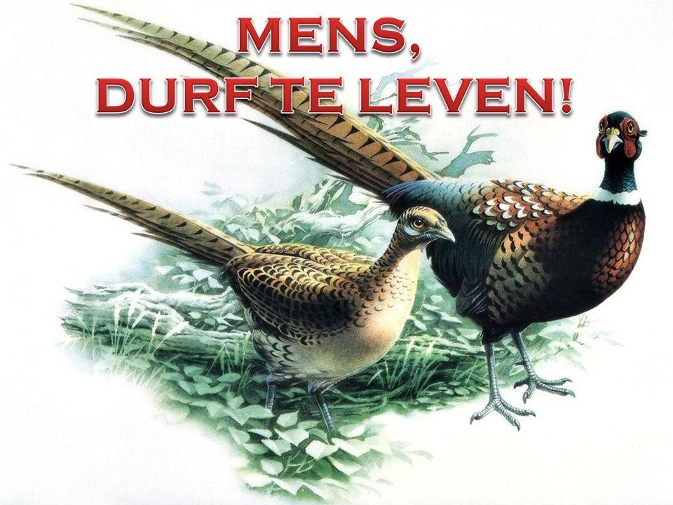 MENS, DURF TE LEVEN! .