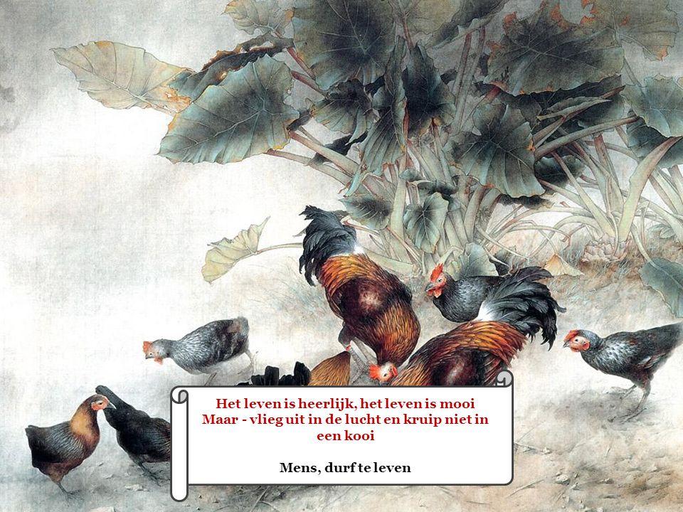 . . Het leven is heerlijk, het leven is mooi Maar - vlieg uit in de lucht en kruip niet in een kooi Mens, durf te leven.