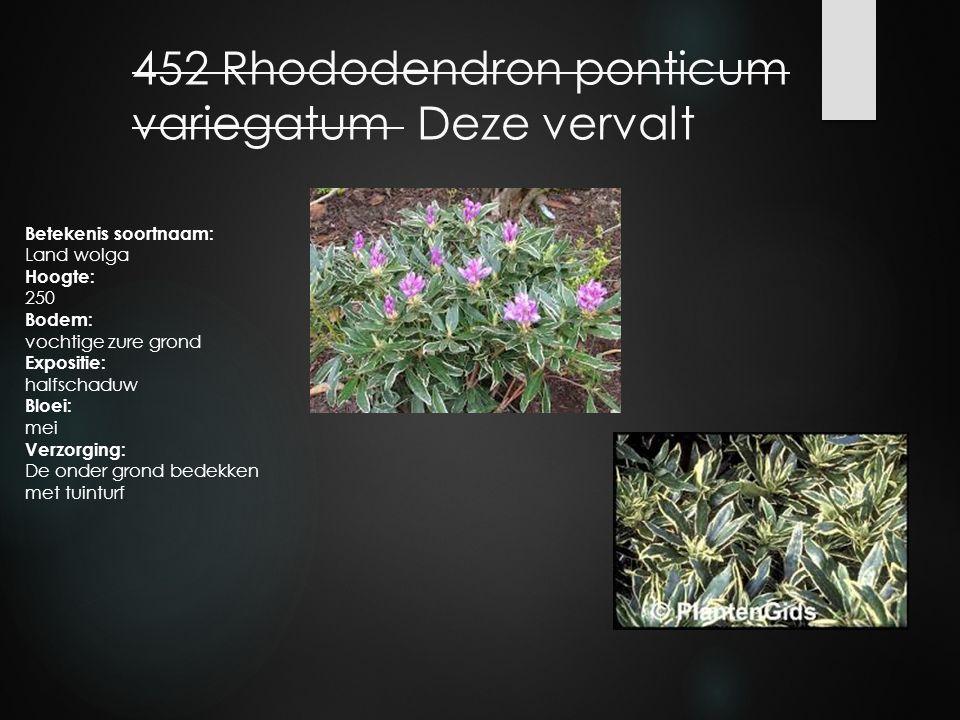 452 Rhododendron ponticum variegatum Deze vervalt