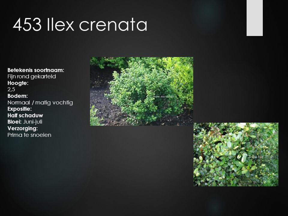 453 Ilex crenata Betekenis soortnaam: Fijn rond gekarteld Hoogte: 2,5