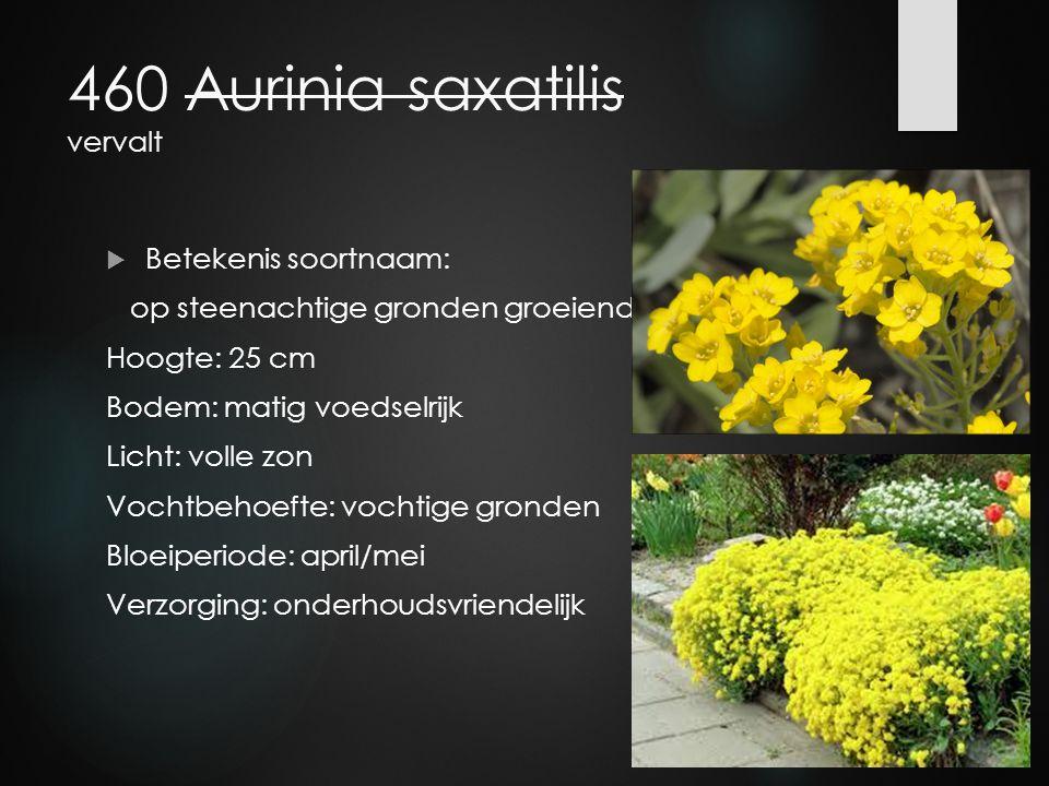 460 Aurinia saxatilis vervalt