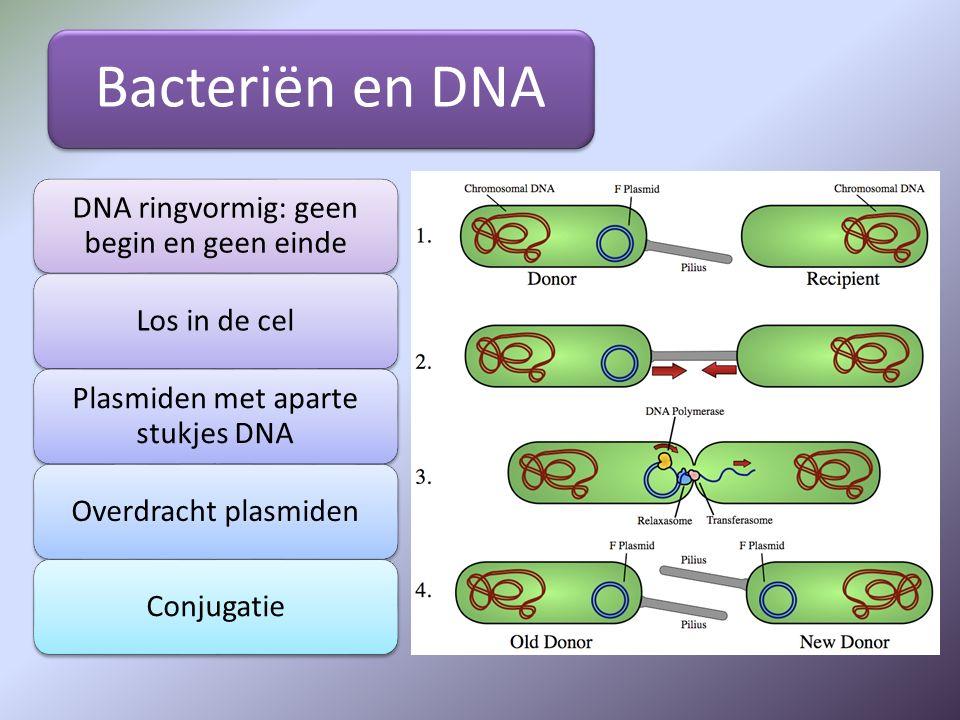 Bacteriën en DNA DNA ringvormig: geen begin en geen einde