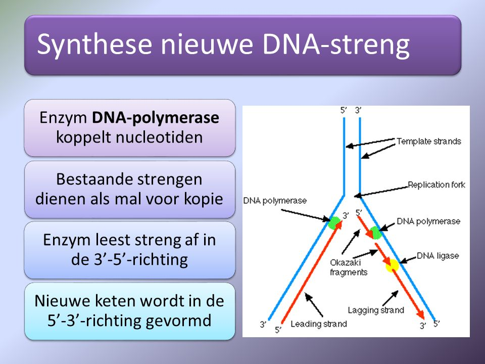 Synthese nieuwe DNA-streng