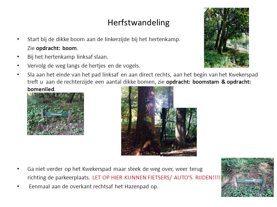 Herfstwandeling Start bij de dikke boom aan de linkerzijde bij het hertenkamp. Zie opdracht: boom.