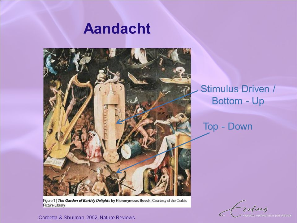 Aandacht Stimulus Driven / Bottom - Up Top - Down