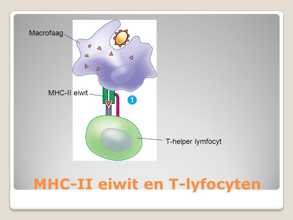 MHC-II eiwit en T-lyfocyten