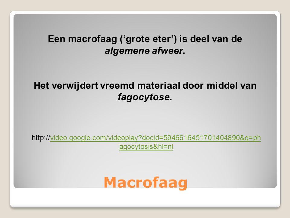 Macrofaag Een macrofaag ('grote eter') is deel van de algemene afweer.